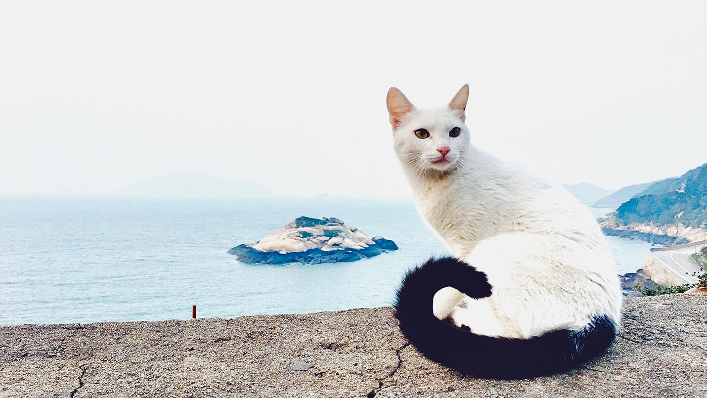 蓝眼睛的猫 a:我叫钻石,和珍珠一样是男生,3 岁,我们是兄弟.